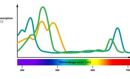 Diagramm Lichtabsorption von Farbstoffen in phototrophen Mikroorganismen