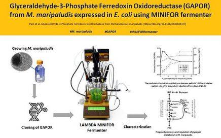 In E. coli exprimiertes GAPORMm unter Verwendung eines LAMBDA MINIFOR Laborfermenters