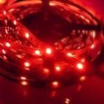 rotes Licht Algen